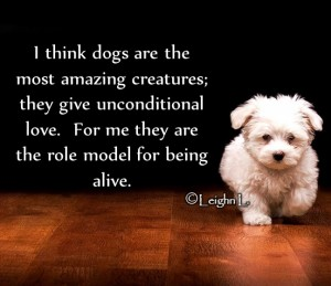 I think dogs are the most amazing creatures