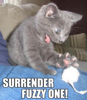 Surrender fuzzy one