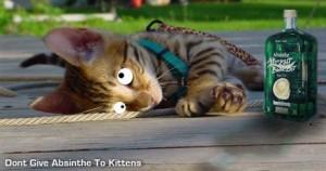 Kitty absinthe