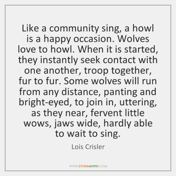 Like a community sing, a howl is a happy occasion. Wolves love ...