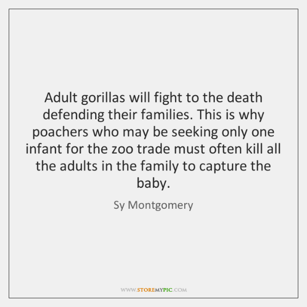 Adult gorillas will fight to the death defending their families. This is ...