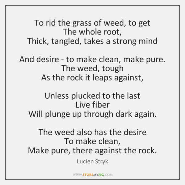To rid the grass of weed, to get   The whole root,   Thick, ...