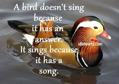 A bird doesnt