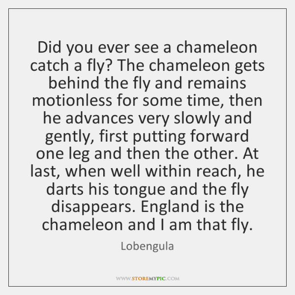 Did you ever see a chameleon catch a fly? The chameleon gets ...