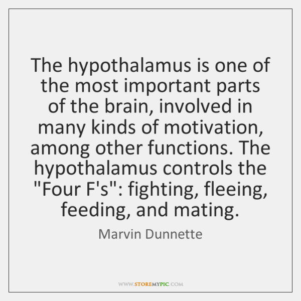 The hypothalamus is one of the most important parts of the brain, ...