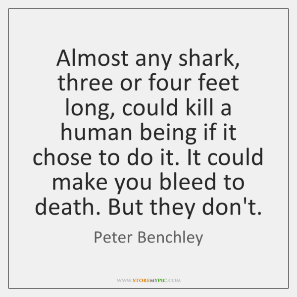 Almost any shark, three or four feet long, could kill a human ...