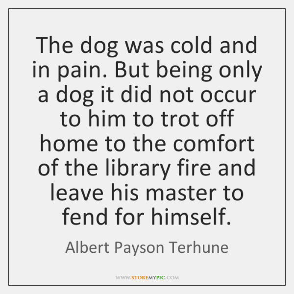 The dog was cold and in pain. But being only a dog ...