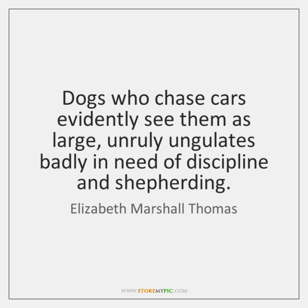 Dogs who chase cars evidently see them as large, unruly ungulates badly ...
