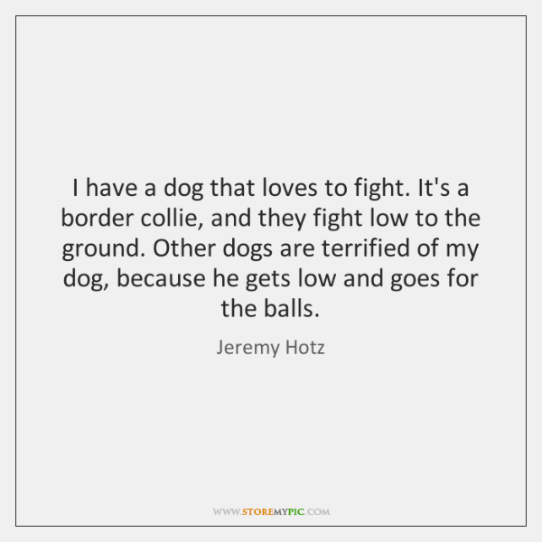 I have a dog that loves to fight. It's a border collie, ...