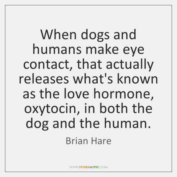 When dogs and humans make eye contact, that actually releases what's known ...