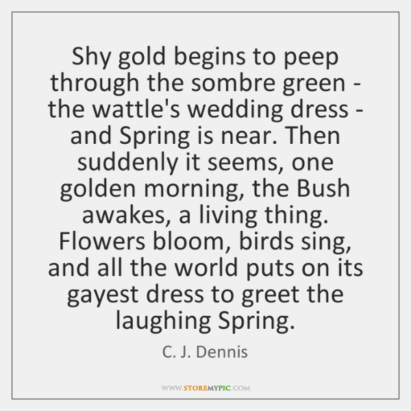 Shy gold begins to peep through the sombre green - the wattle's ...