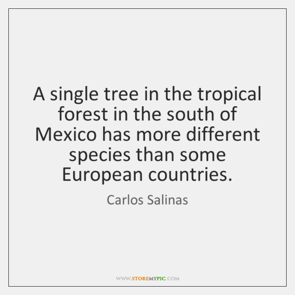 A single tree in the tropical forest in the south of Mexico ...