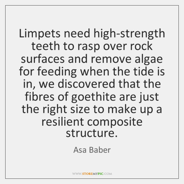 Limpets need high-strength teeth to rasp over rock surfaces and remove algae ...