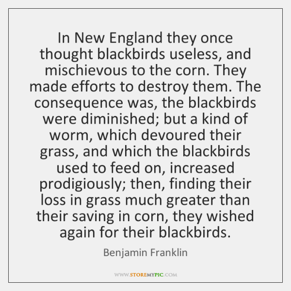 In New England they once thought blackbirds useless, and mischievous to the ...