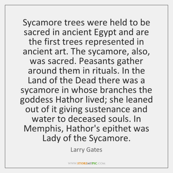 Sycamore trees were held to be sacred in ancient Egypt and are ...