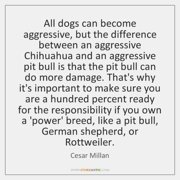 All dogs can become aggressive, but the difference between an aggressive Chihuahua ...