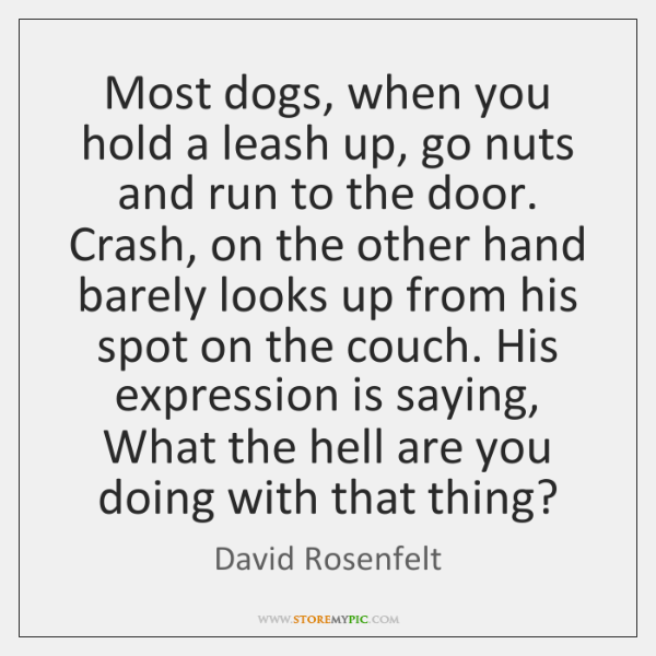 Most dogs, when you hold a leash up, go nuts and run ...