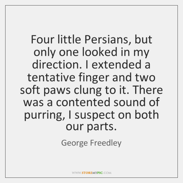 Four little Persians, but only one looked in my direction. I extended ...