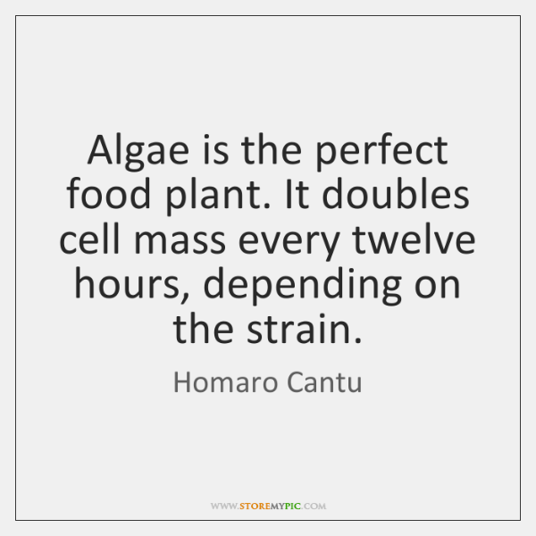 Algae is the perfect food plant. It doubles cell mass every twelve ...