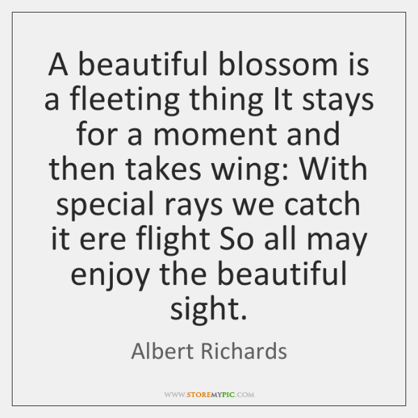 A beautiful blossom is a fleeting thing It stays for a moment ...