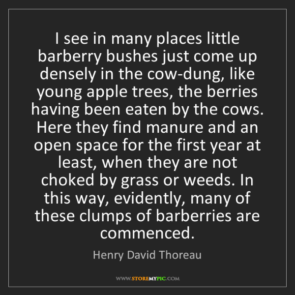 Henry David Thoreau: I see in many places little barberry bushes just come...