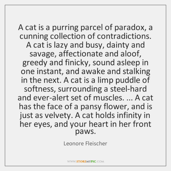 A cat is a purring parcel of paradox, a cunning collection of ...