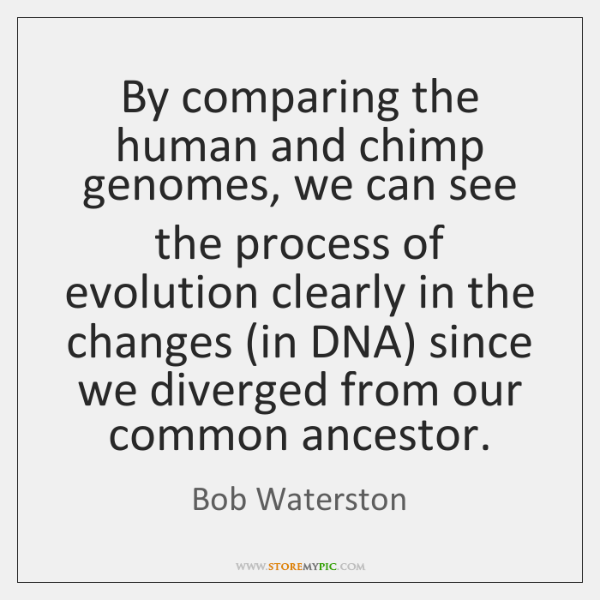 By comparing the human and chimp genomes, we can see the process ...