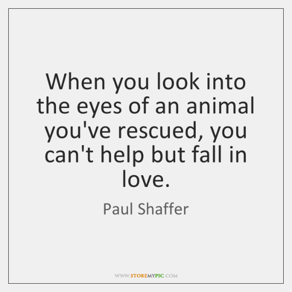Image result for when you look into the eyes of an animal you are rescued