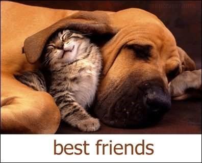 Best friends cat dog