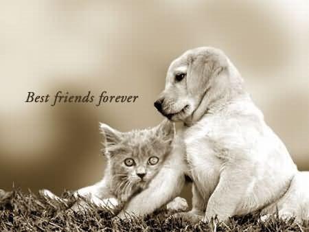 Best friends forever cat dog