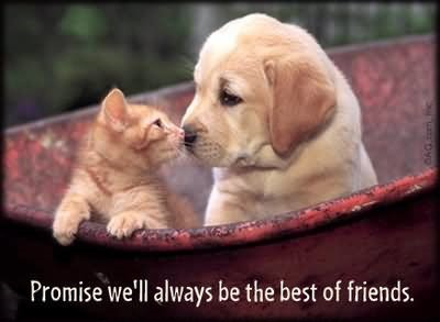 Promise well always be the best of friends cat and dog