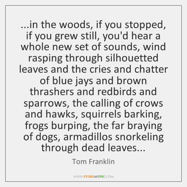 ...in the woods, if you stopped, if you grew still, you'd hear ...