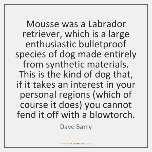 Mousse was a Labrador retriever, which is a large enthusiastic bulletproof species ...