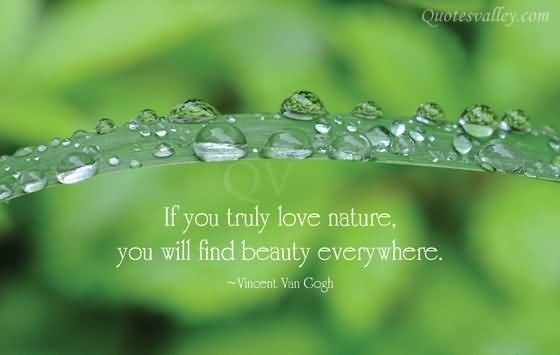 If you truly love nature you will find beauty everywhere vincent van gogh