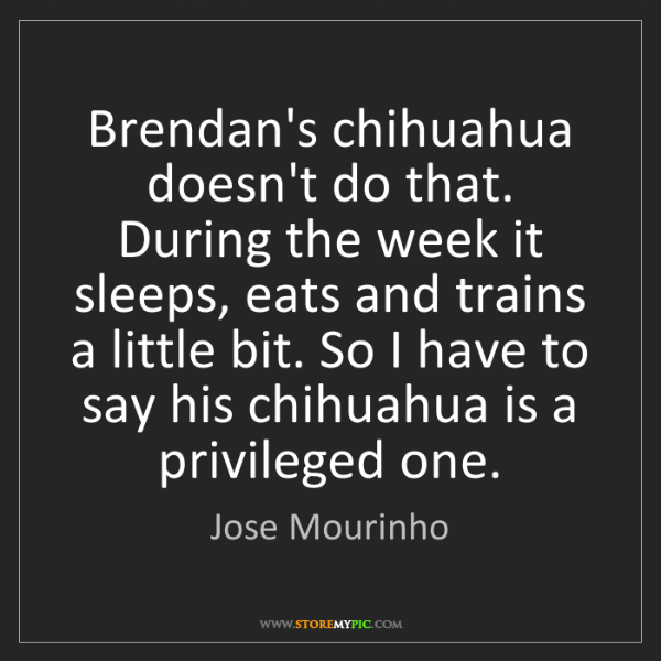Jose Mourinho: Brendan's chihuahua doesn't do that. During the week...