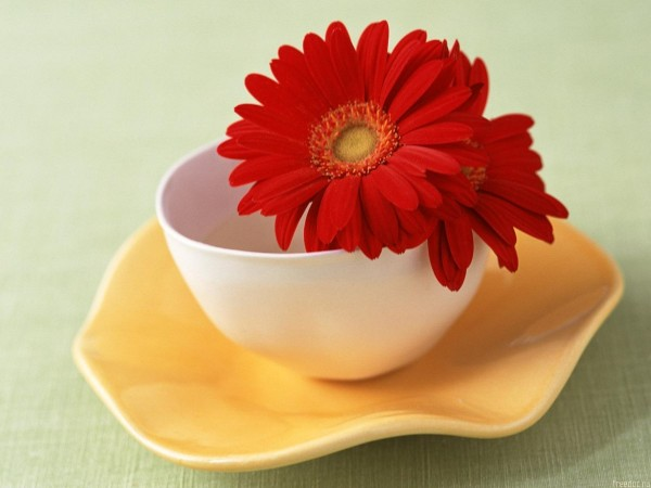Red flower in tea cup