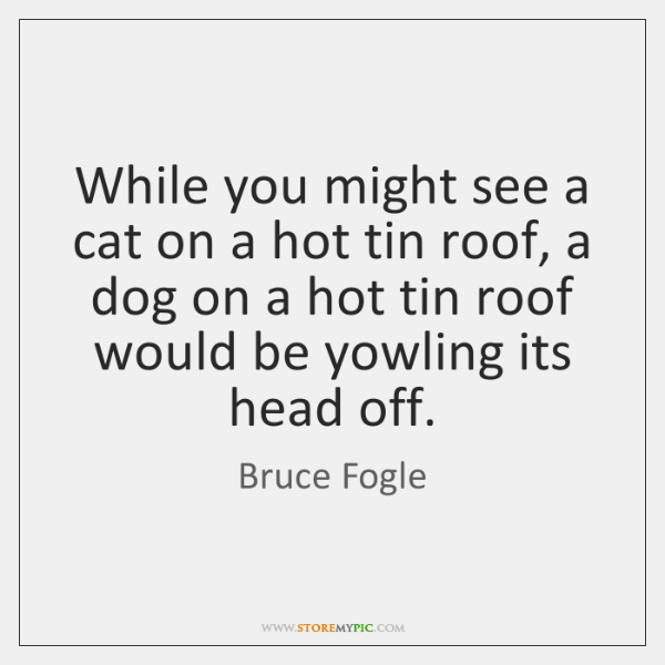 While you might see a cat on a hot tin roof, a ...