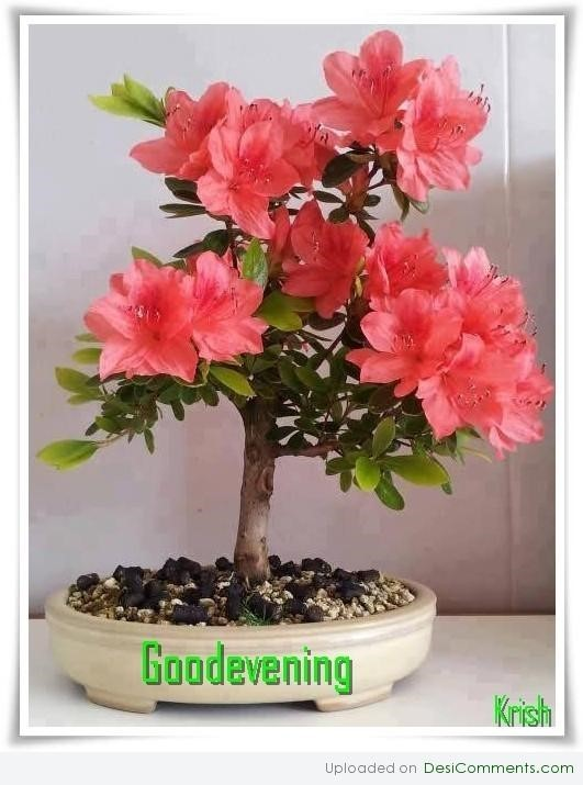 Good evening flower pot image