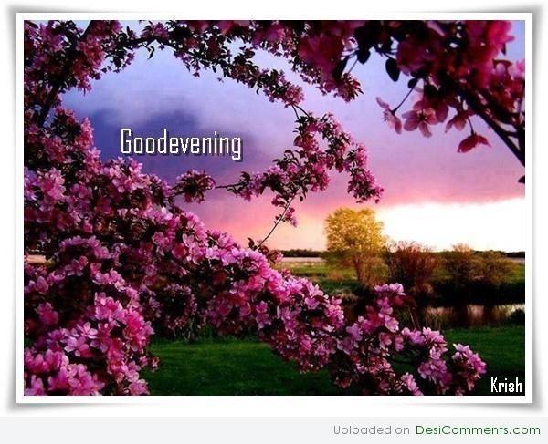 Good evening flowers 002