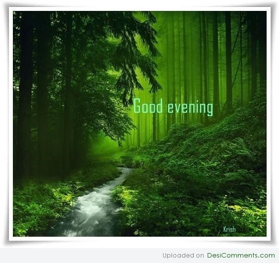 Good evening forest view