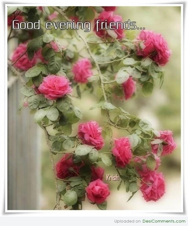 Good evening friends roses