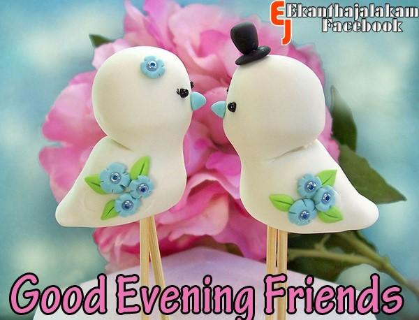 Good evening friends sparrows couple