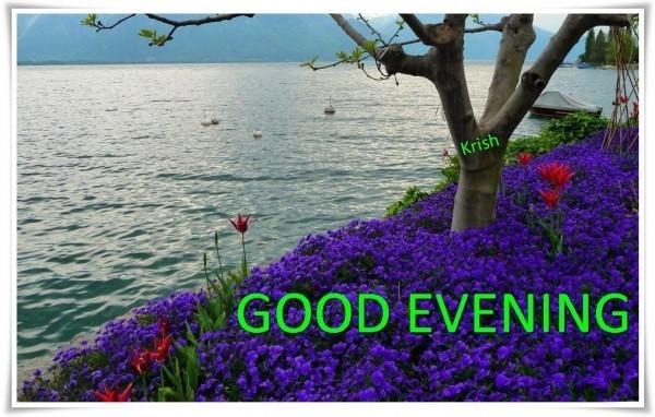 Good evening purple flowers field