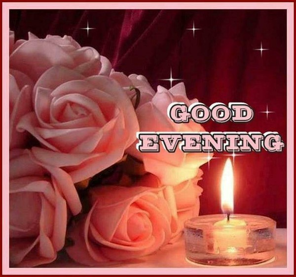 Good evening roses