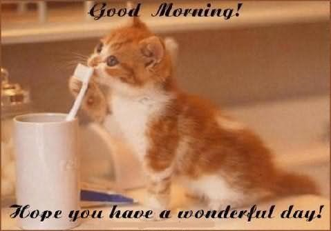 Good Morning Hope You Have A Wonderful Day Cat Storemypic