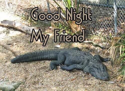 Good night my friend crocodile