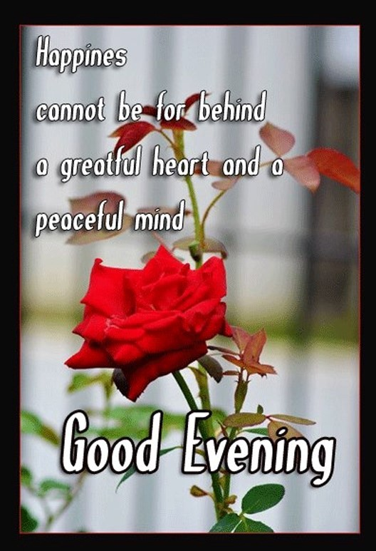 Happiness cannot be for behind a greatful heart and a peaceful mind good evening