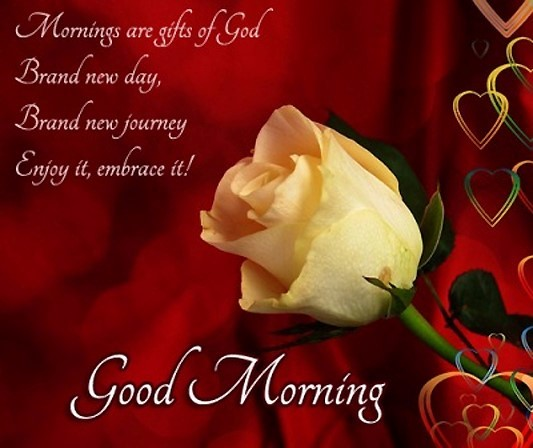 Mornings are gifts of god brand new day brand new journey enjoy it embrace it good morning