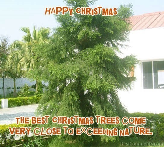 The best christmas trees come very close to exceeding nature
