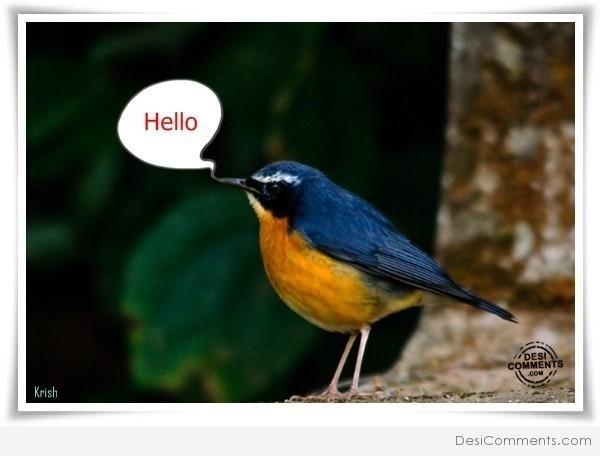 Beautiful bird says hello